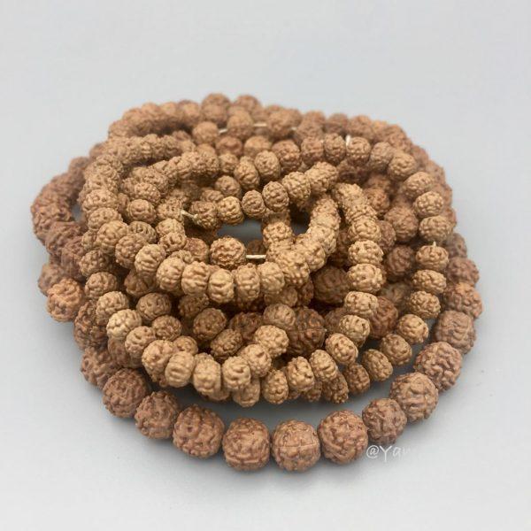 seed-zaad-stone-steen-rudraksha
