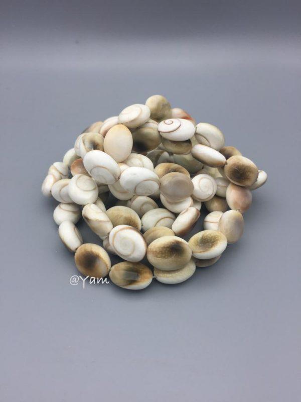 stone-steen-shiva-schelp-shell